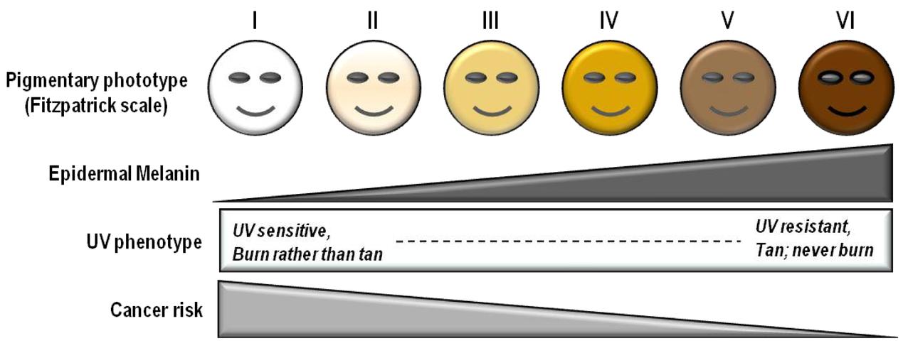 Escala de fototipos de piel