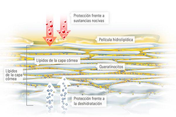 manto acido de la piel