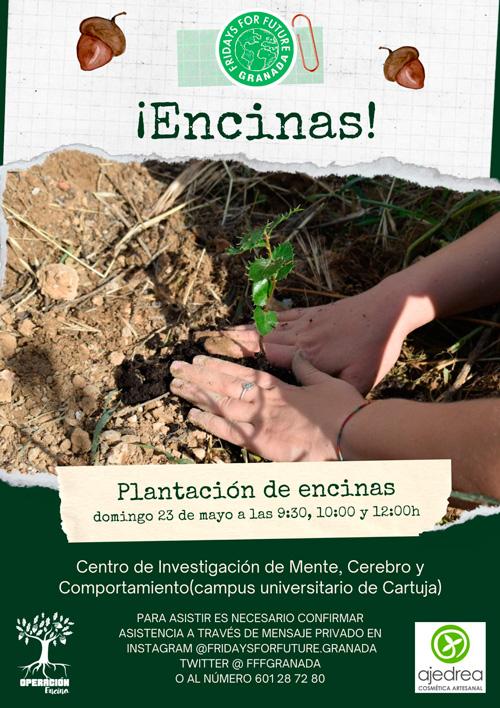 reforestacion encinas granada